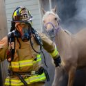 Firefighter rescuing horse from barn