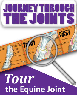 Journey Through the Joints