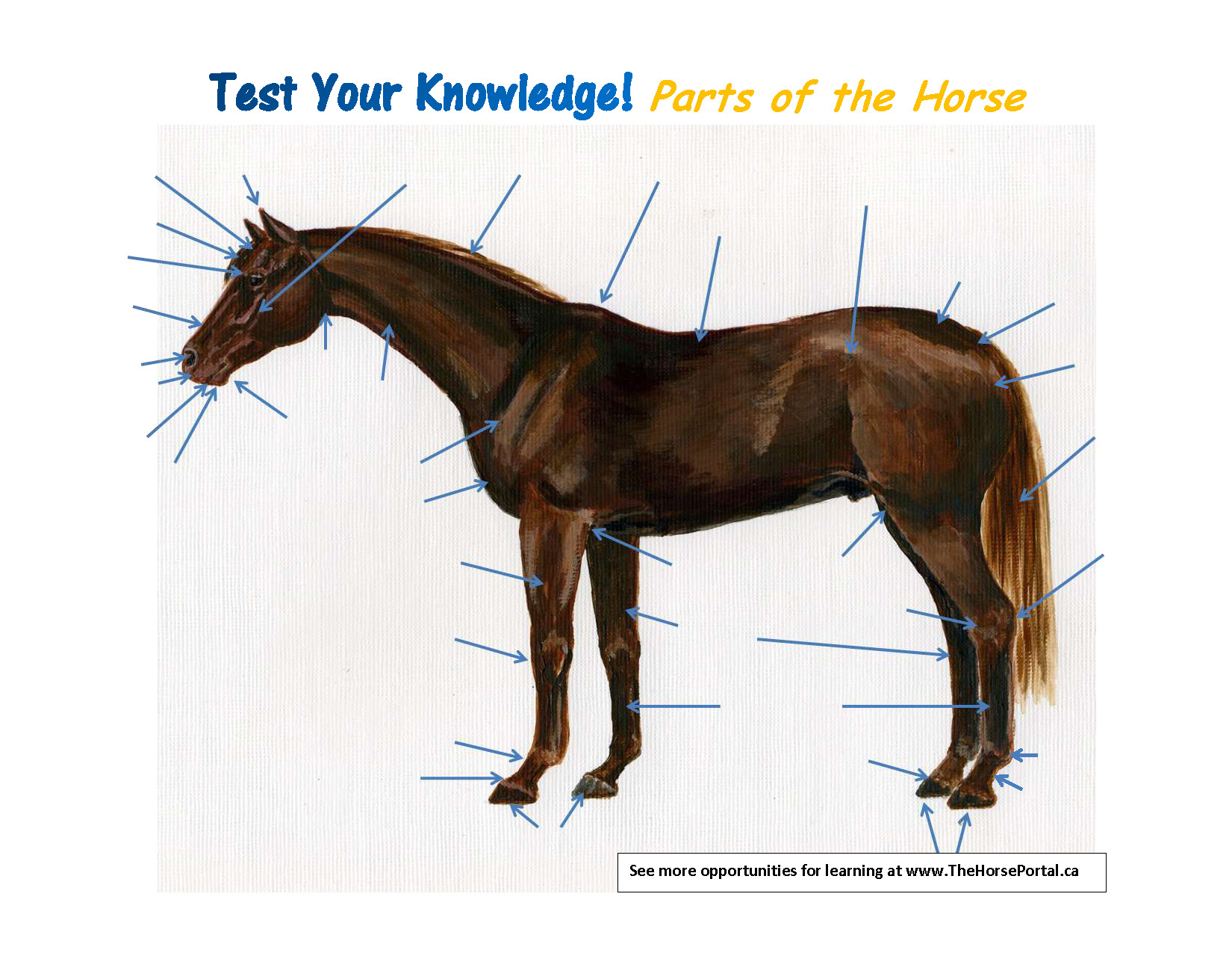 Test Your Knowledge - Parts of the Horse