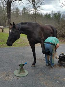 Farrier work at liberty
