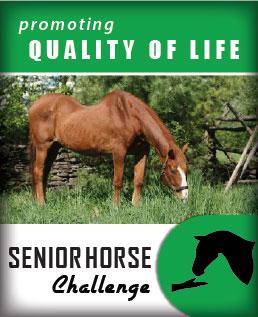Senior Horse Challenge