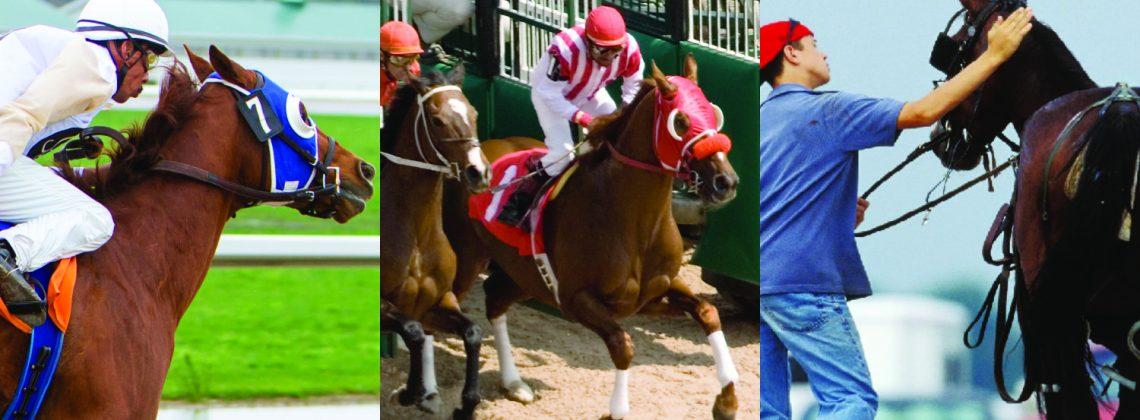 horse racing photos
