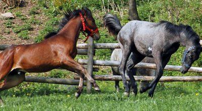 Horse Behaviour & Safety – Fall '20