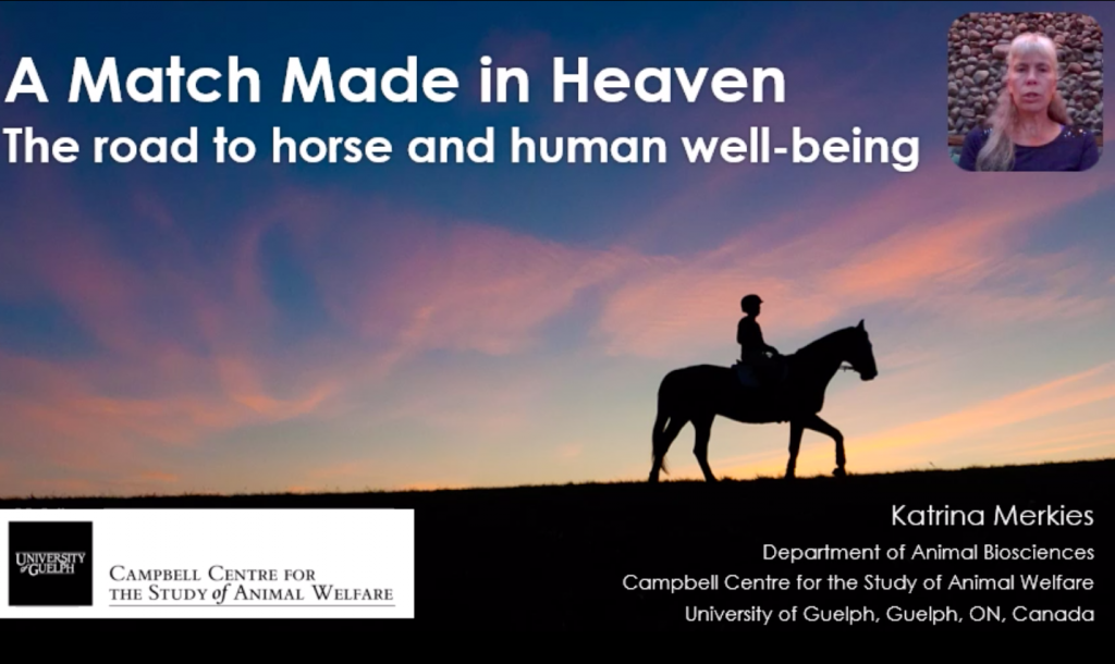 Horse Human Interaction presentation slide