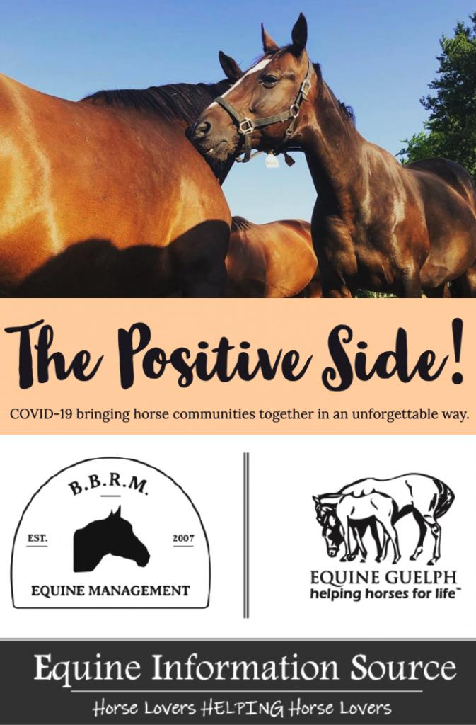 Equine Information Source image
