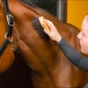 Equine JobTrack image